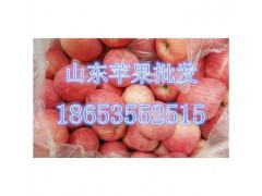 山东冷库红富士苹果