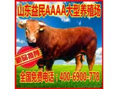 益民养殖出售利木赞牛 安徽改良利木赞牛波尔山羊