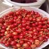 大樱桃苗出售贵州大樱桃苗