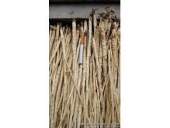 去皮沙参 中草药类  供应内蒙带皮沙参  植物原药材