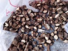 干防风  供应地产干防风 植物原药材