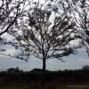 61苗木 朴树绿化树苗 精品朴树批发 胸径19cm朴树 朴树价格 精品丛生朴树 品种齐全 欢迎选购