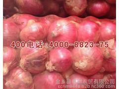 金乡存财农贸大量求购洋葱