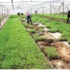 观光旅游园区规划设计找河南泰哲农业
