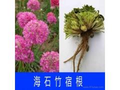 蓝翔园艺ARM02 花卉销售 一二年生花卉销售 一二年生草本花卉 花卉销售 一 二年生草本花卉
