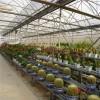 量身订做_大型花卉展棚 /花卉展览大棚/育苗养殖大棚