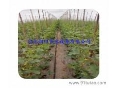 汉中灌溉软带价格 厂家实惠报价 农用工具