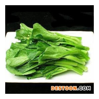 野菜万年青批发 包子/饺子/馄饨用野菜馅