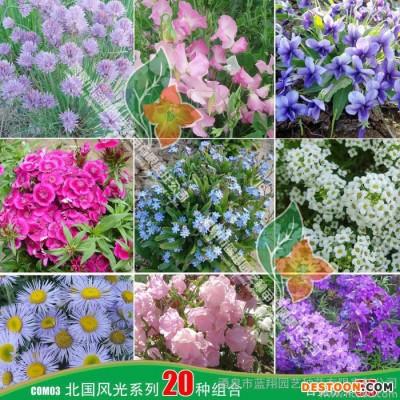 供应厂家直销花卉种子、景观绿化种子、彩色包装种子、花卉种子、草花组合(喜庆系列)