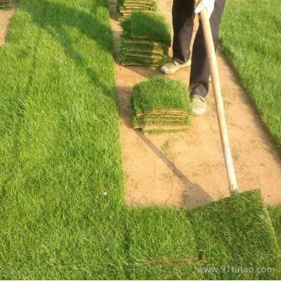 61苗木 草坪基地直销各类草坪 批发百慕大黑麦草混播草坪 四季青草坪厂家  绿化草坪 混播草坪价格优惠 成活率高