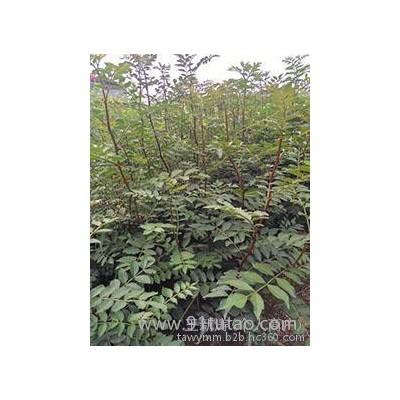 花椒苗现在农业产业技术果洛藏族自治州怎么推广花椒苗产量