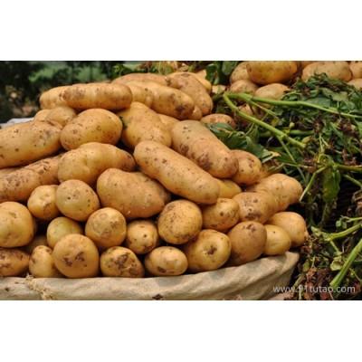 杨凌八览农业推广有限公司供应八览农业定边土豆杂粮,量大从优