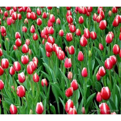 观赏植物租赁