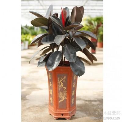 供应轩博花木盆重庆轩博花卉植物租赁;重庆室内盆