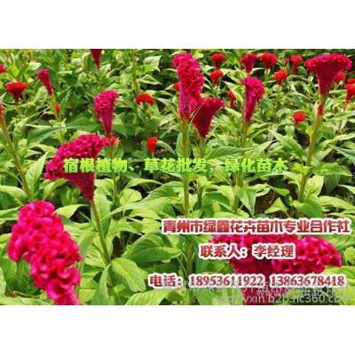室内绿色植物租赁,室内植物租赁,请找青州绿鑫