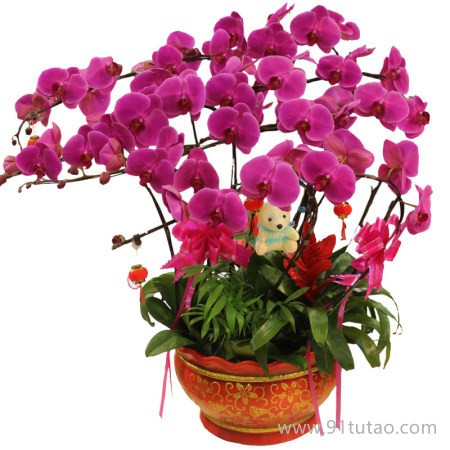供应余杭区植物租赁,花卉出租