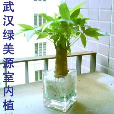 供应武汉植物花卉租赁,办公绿化,植物花卉租摆,植物花卉出租 ,园艺咨询