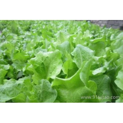 时令蔬菜 青菜  白菜、菠菜