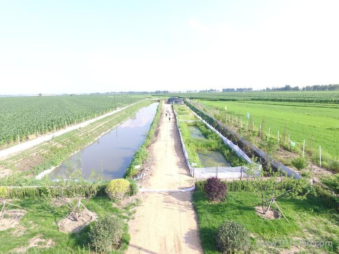 蟾蜍养殖技术大全,农业致富好项目,致富经推荐