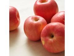 东部源生态 烟台苹果 新鲜苹果 苹果批发 苹果价格 苹果厂家 欢迎来电咨询