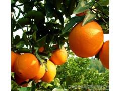 【预售】江西特产原生态种植脐橙 新鲜水果赣南脐橙10斤孕妇水