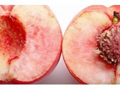 东部源生态 烟台桃子  新鲜水果 桃子批发 桃子价格 桃子厂家 欢迎来电咨询