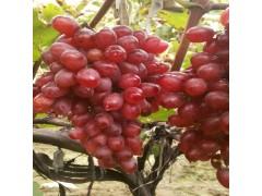 恒发  新鲜水果 颗粒饱满 克伦生葡萄 新鲜葡萄 品种齐全