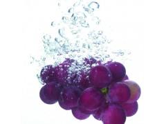恒发 自产自销 新鲜水果 新鲜葡萄  巨峰葡萄 可批发