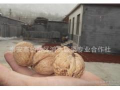 【2014薄皮核桃】新疆特产大核桃 纸皮核桃新货零食广州