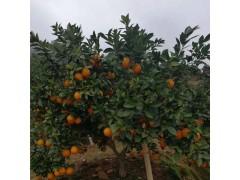 鲁鲜生批发 赣南脐橙江西特产新鲜水果原生态橙子 10斤装 面议