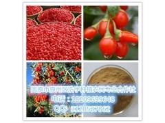枸杞粉 枸杞提取物  枸杞浓缩粉  有机枸杞酵素粉