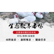 浦城县厦浦果蔬种植合作社