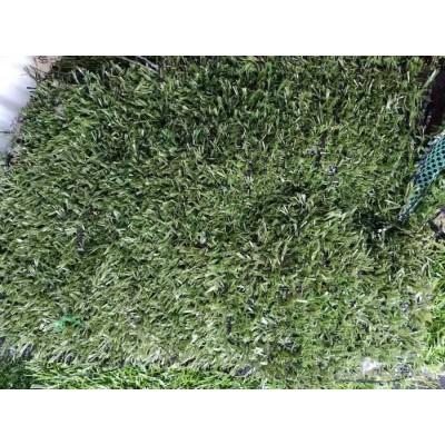 草坪围挡 假草坪绿植草坪 地面草坪安徽草坪批发草坪规格