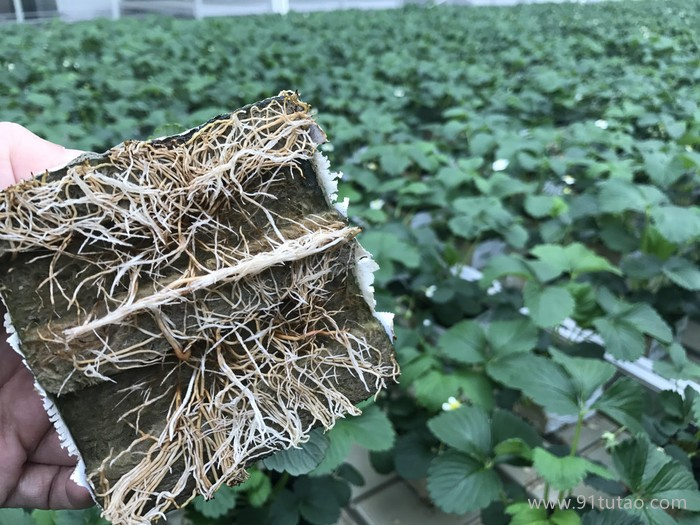 wallroof农业岩棉欢迎新老客户咨询采购农业岩棉育苗塞