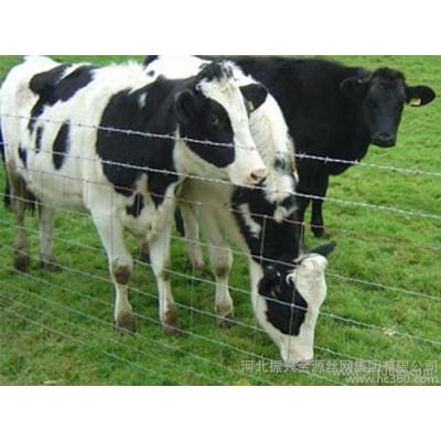 农场围栏网  优质农场围栏网 农场围栏网厂家  品质保证
