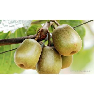 红心猕猴桃苗|猕猴桃的种植技术 猕猴桃种植技术 猕猴桃种植新技术 猕猴桃种植技术视频 红心猕猴桃猕猴桃种植 猕猴桃种植