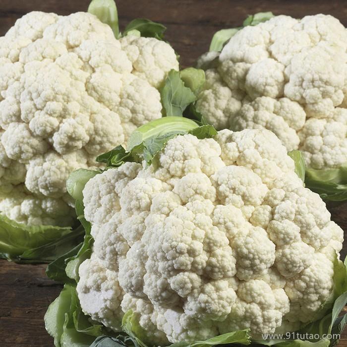饶阳恒发 代购批发 新鲜蔬菜   优质菜花 白色菜花