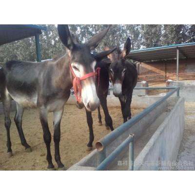 出售肉驴 肉驴养殖 肉驴价格 肉驴 育肥驴 养殖驴 毛驴