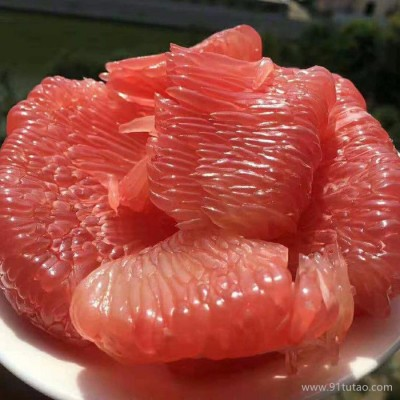 红心柚 柚子 平和惠源红心柚 专业做蜜柚进出口