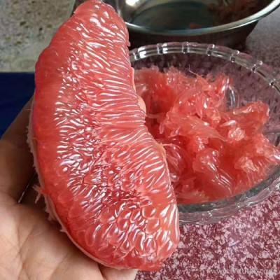 惠源 柚子 红心柚 专业红心柚进出口