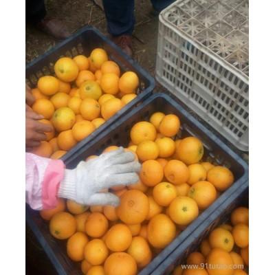 生产直销新鲜柑橘水果春见耙耙柑春见柑橘丑柑丑橘四川