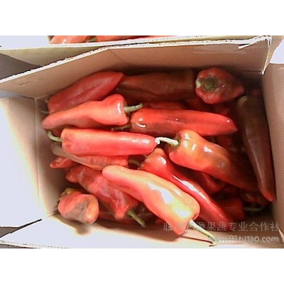 供应大量蔬乐源富硒蔬菜--富硒泡椒