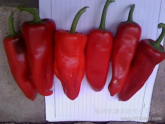 供应大量蔬乐源有机富硒蔬菜-富硒泡椒