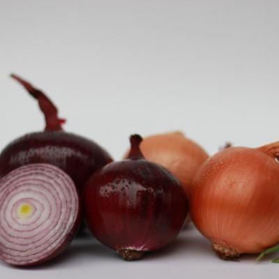 科威 洋葱种子 长日照洋葱种子 中日照洋葱种子