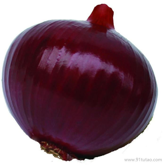 科威红13号 中日照 红皮洋葱种子紫红色 鳞茎大 不易分球 耐贮