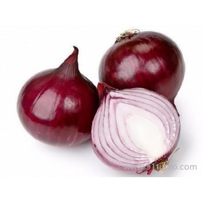 科威红4号   洋葱种子 中熟 紫红色 短日照 高产