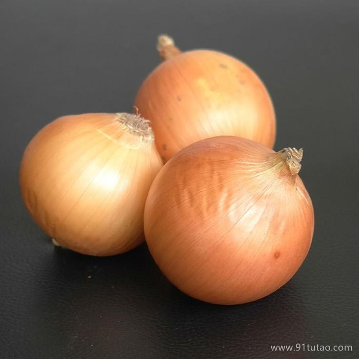 科威  蔬菜种子   黄5号、短日照黄皮洋葱种子、极早熟、较高产、黄皮、圆球形