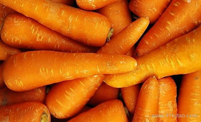 金杞牌新鲜红萝卜 胡萝卜种植 胡萝卜批发  胡萝卜价格