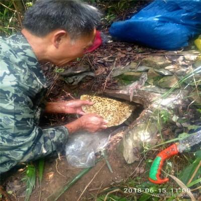 厂家直销 蜂蜜 野生蜂蜜 野生土蜂蜜 土蜂蜜供应