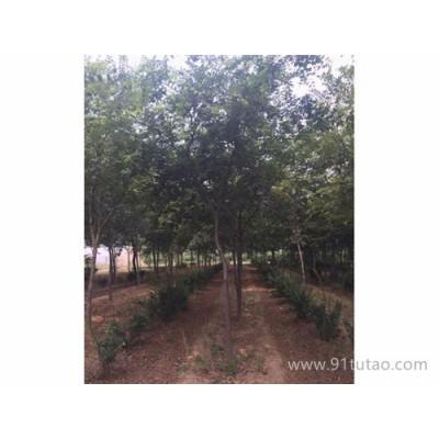 京山仁和 朴树